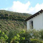 La casa, entre olivos.